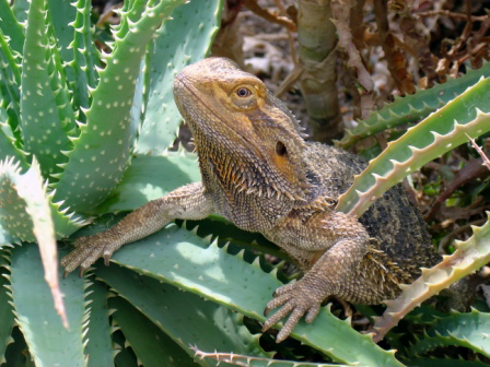 Kaktus mit Baragame
